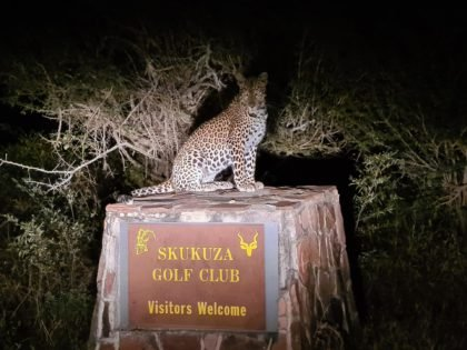 Video: The Skukuza Golf Club is a Wildlife Paradise With Leopards and Lions and Exotic Animals