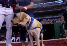Clint the dog performed the ritual of Ceremonial First Pitch for Washington Nationals